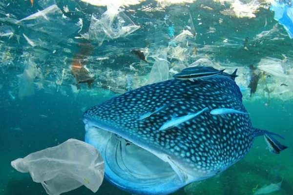 Năm 2025: Việt Nam sẽ không sử dụng đồ nhựa dùng một lần